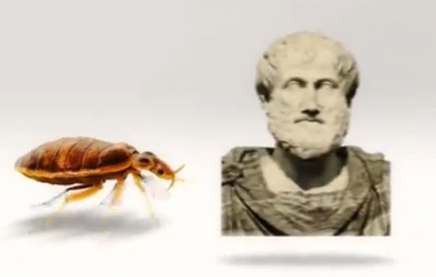 Bed Bug History - Cimex Lectularius History